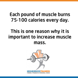 muscle burns 75-100 calories per day